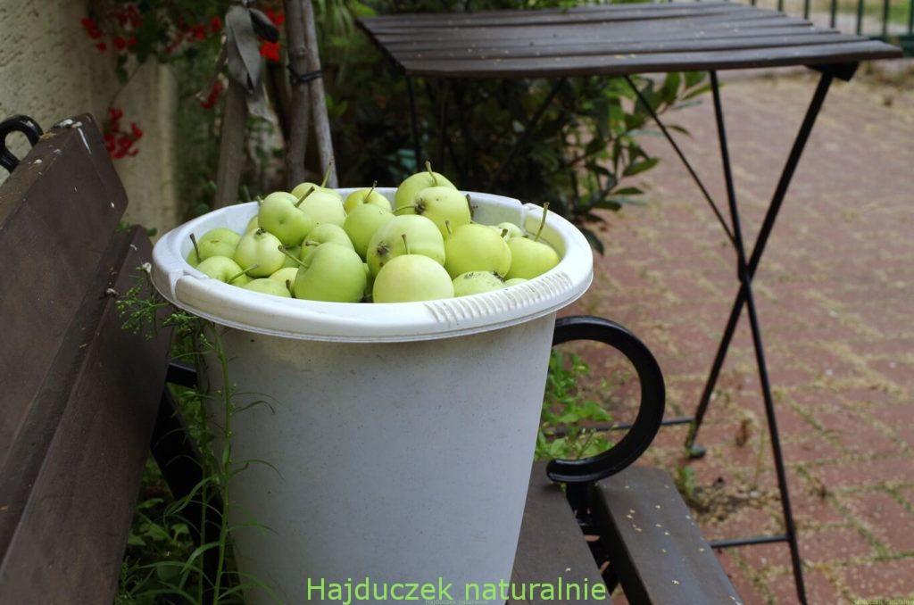 letni ocet jabłkowy