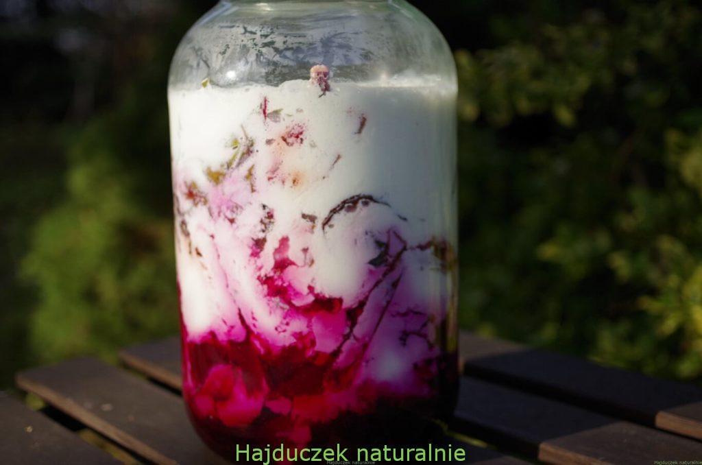 botwinka fermentowana w kefirze