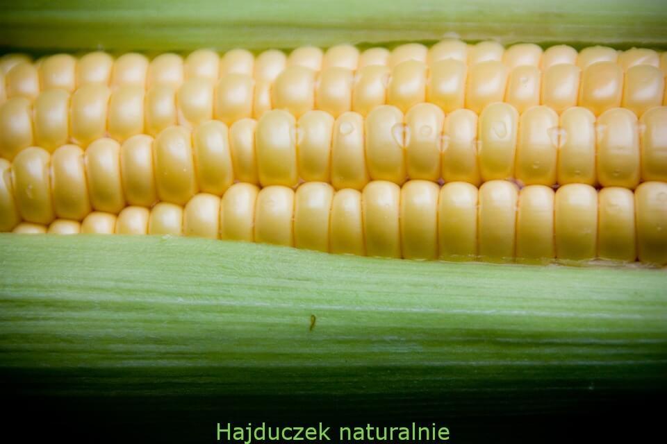 sos azjatycki z kukurydzą