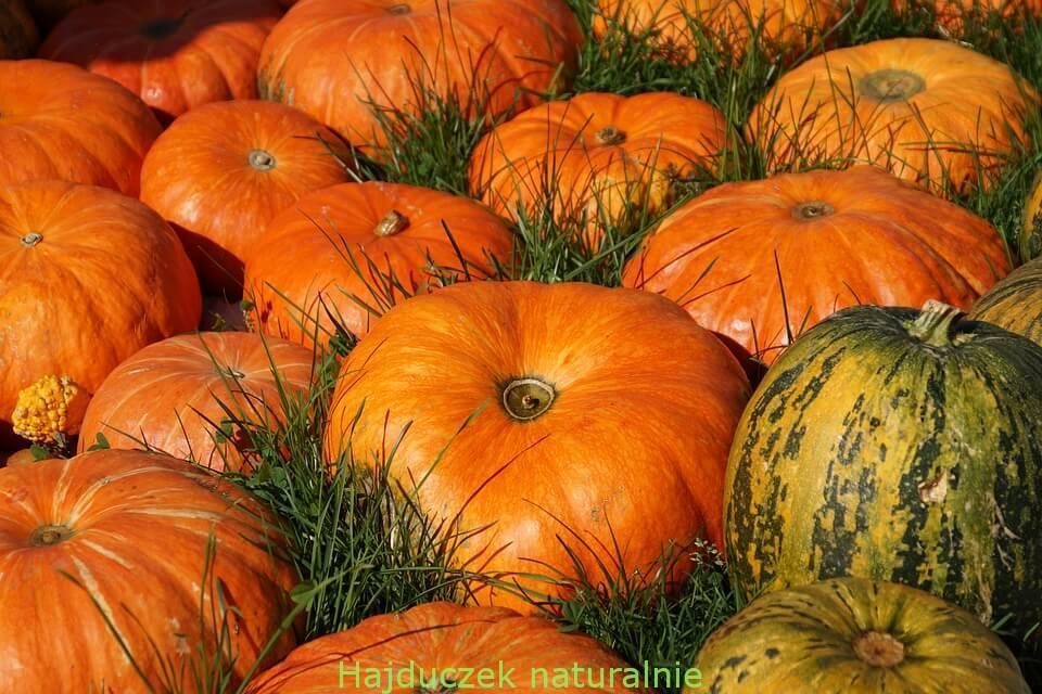zapiekanka w kolorze jesieni
