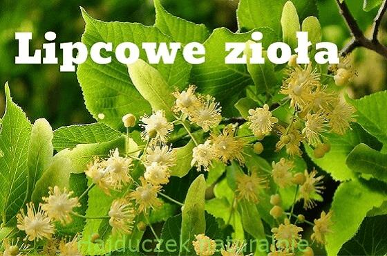 Lipcowe zioła