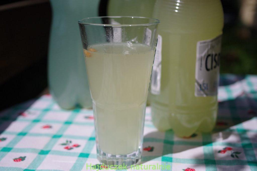 nowa lemoniada miodowa