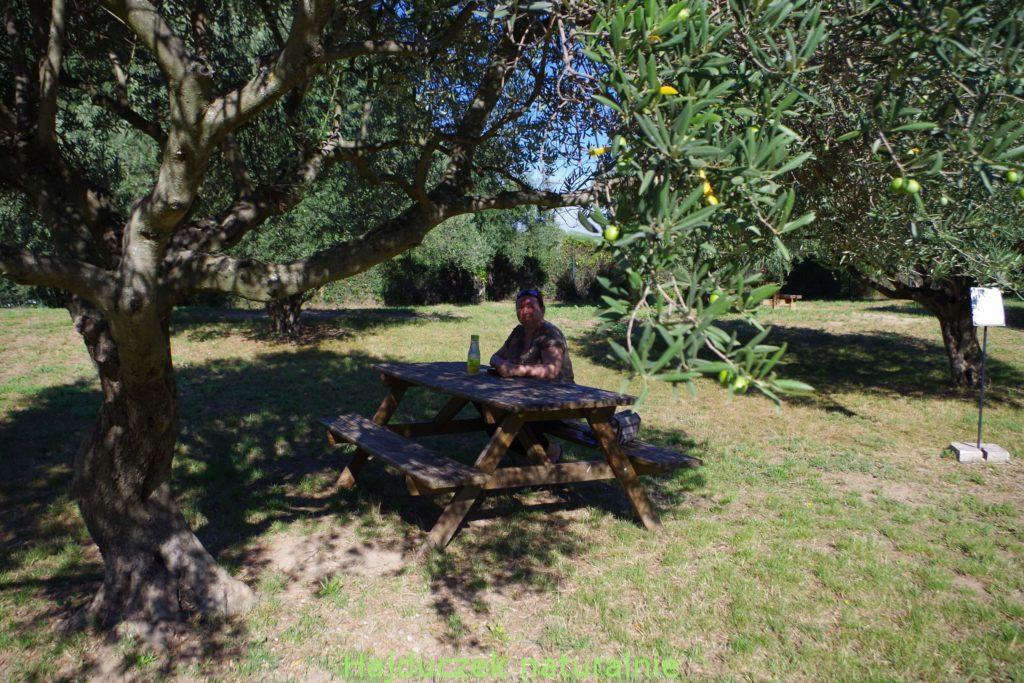 syrop lawendowy i gaj oliwny