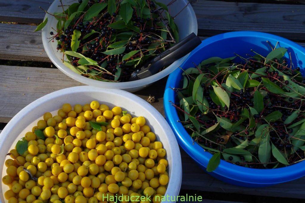 owoce czeremchy i mirabelki